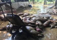 Xót xa cảnh Thị trấn Thanh Sơn lầy lội, tan hoang sau đợt mưa lũ lịch sử