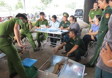Hải quan Đà Nẵng chủ trì bắt giữ khoảng 6 tấn vảy tê tê và 2 tấn ngà voi