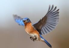 """""""Điềm báo"""" của con chim xanh giúp tìm mộ liệt sỹ"""
