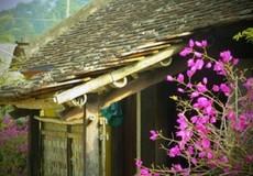 Làng cổ trăm tuổi nức tiếng xứ Thanh