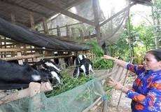 Vốn chính sách chắt chiu xây dựng vị thế của phụ nữ Việt