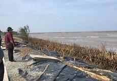 Cà Mau quyết định tiếp tục làm kè chắn sóng bảo vệ bờ biển