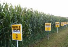 Monsanto – tội đồ của môi trường toàn cầu  Kỳ 6 -  Tham vọng bá chủ ngành công nghiệp giống cây trồng