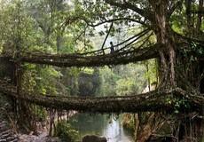 """Khám phá những """"cây cầu sống"""" ở nơi """"mưa nhiều nhất"""" thế gian"""