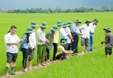 Nông dân Đồng bằng sông Cửu Long thêm động lực để tin vào cây lúa