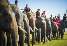 Mai này lên Đắk Lắk có còn voi