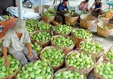 76% rau quả Việt Nam được xuất sang Trung Quốc