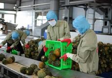 Rau quả Việt bứt phá ngoạn mục khi 'đem chuông đánh xứ người'