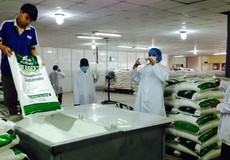 TP Hồ Chí Minh: Phát hiện có sở làm giả thương hiệu bột ngọt A-One