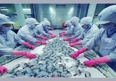 Hàn Quốc là thị trường tiềm năng cho xuất khẩu tôm Việt