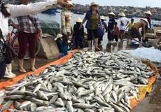 Thanh Hóa: Báo cáo Thủ tướng vụ cá chết bất thường tại vùng biển Tĩnh Gia