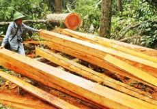 """""""Lâm tặc"""" tàn phá rừng đệm Di sản Phong Nha: Đường đi ngập gỗ lậu"""