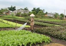 """""""Thực phẩm chức năng"""" cho cây trồng"""