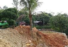 Sai phạm trong cưỡng chế, Chủ tịch phường phải bồi thường 5 cây dừa cho dân