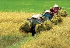 Quản lý nhà nước về kinh doanh xuất khẩu gạo: Hai mục đích nên tập trung nhắm tới