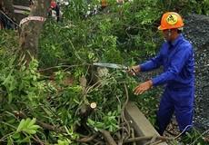 Hà Nội: Di chuyển, chặt hạ gần 1300 cây xanh trên đường Phạm Văn Đồng