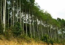 Quy định về quy hoạch rừng tư nhân: Cơ quan Nhà nước can thiệp quá mức ?