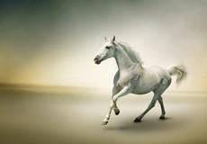 """""""Ngựa bạch báo oán"""" và chuyện bi thương về những cái chết của một gia đình 3 đời làm nghề đồ tể"""