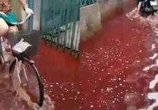 """Bình Định: Kinh hãi nước đỏ lòm """"đầu độc"""" khu dân cư"""