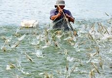 Chính phủ chỉ đạo quy hoạch nuôi tôm theo hướng đảm bảo tính liên kết