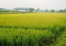 Chuyển đất nông nghiệp sang đất SXKD thế nào?