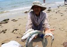 Lập 4 đoàn kiểm tra việc bồi thường thiệt hại môi trường biển tại miền Trung