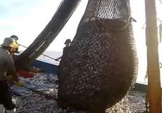 Quảng Bình: Truy quét 'hung thần' giã cào trên biển