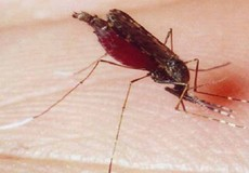 Hà Nội đã có 7 tới ca tử vong do sốt xuất huyết