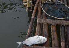 Huế: Thông tin mới nhất cá chết ở đầm Cầu Hai
