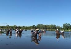 Hàng trăm người háo hức đội nắng, tắm bùn bắt cá lấy 'hên' ở Quảng Trị