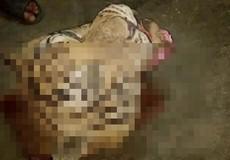Chuyên án 106H phá đường dây mua xác hổ ướp lạnh
