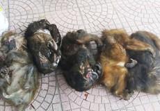 Bắt hai đối tượng chở 7 cá thể khỉ và xương động vật