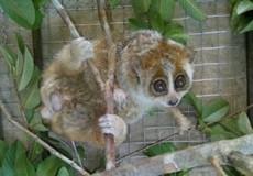 Quảng Bình: Cứu hộ nhiều động vật hoang dã và thả về tự nhiên