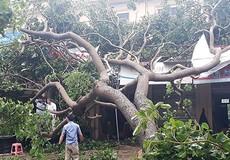 'Bài học xương máu' của Nghệ An - Hà Tĩnh sau 3 tháng 4 lần 'gánh' bão