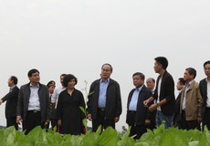 Chủ tịch Ủy ban TWMTTQ Việt Nam Nguyễn Thiện Nhân thăm trang trại TH