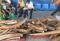 Thêm một vụ buôn lậu ngà voi qua cảng Cát Lái bị khởi tố