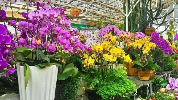 Sắp diễn ra lễ hội hoa lan lớn nhất từ trước tới nay tại TP HCM