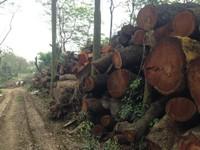 21 câu trả lời của Hà Nội về việc chặt cây có thỏa lòng dân?