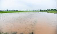 Hà Nội ngập khoảng 2.000ha lúa và hoa màu do mưa bão số 2