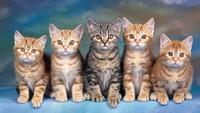 Kỳ lạ bầy mèo 20 năm cho bà chủ nhau thai đổi vàng