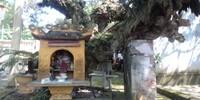 Chuyện khó tin ở ngôi đền thiêng  thờ Thánh mẫu Chinh Nương