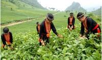 Hệ Lụy từ việc khai thác của Công ty TNHH Đá Cẩm Thạch RK Việt Nam với người dân Yên Bái