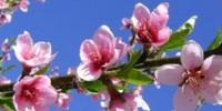 Thú vị những tục kiêng kị ngày đầu Xuân năm mới của người xưa