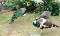Nghỉ lễ 30/4 – 1/5, tới khám phá vườn chim nhiệt đới rực rỡ tại FLC Sầm Sơn