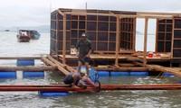 Khôi phục nghề nuôi tôm hùm trên biển Khánh Hòa