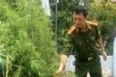 Bố 'trữ' heroin, con trồng cần sa