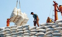 Chính phủ quy định cụ thể điều kiện kinh doanh xuất khẩu gạo