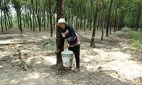 Vụ tranh chấp quyền sử dụng đất tại Đồng Nai: Bị đơn mòn mỏi chờ phiên tòa phúc thẩm