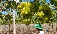 Nông trại chia sẻ: Tiềm năng phát triển bền vững tại Việt Nam