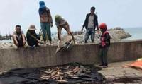 Lại xảy ra hiện tượng cá chết ở Vũng Áng
